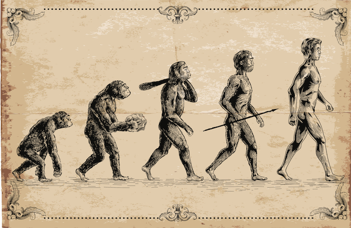 image of evolution of man from primates